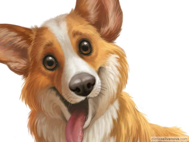 Corgi - Art of Elena Selivanova