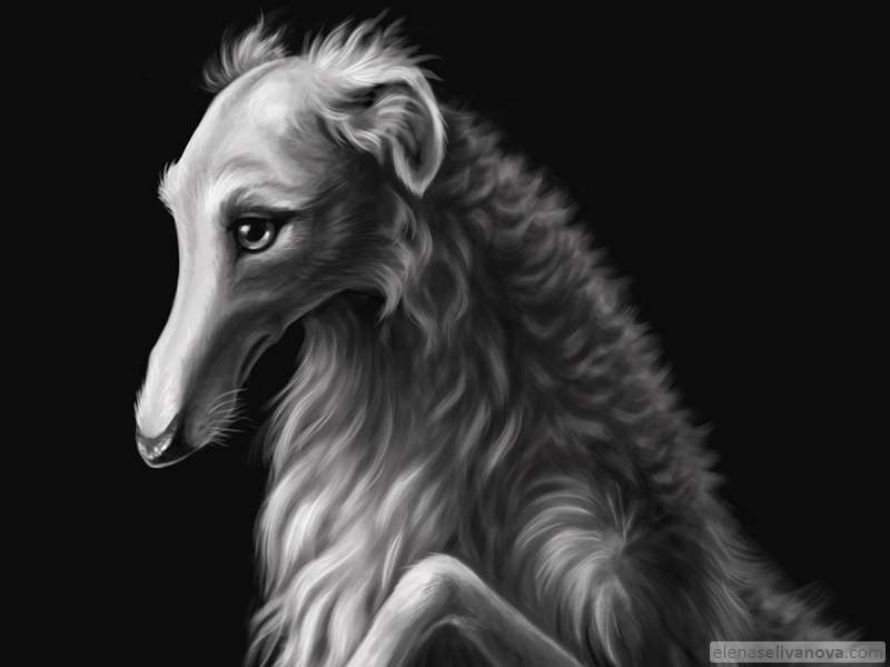 Borzoi - Art of Elena Selivanova